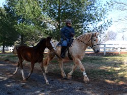 Ponying a client's weanling